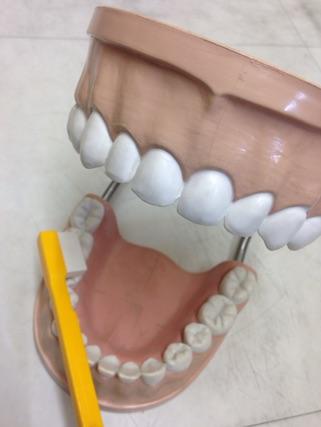 歯ブラシ指導_a0112220_2063348.jpg