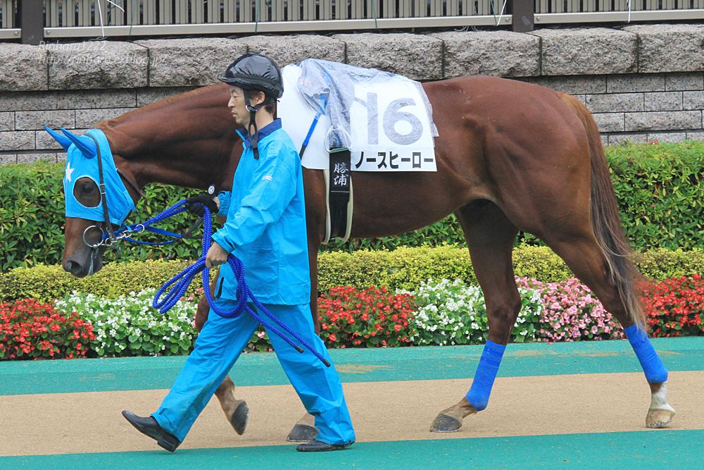 2014.6.8 東京競馬場☆ノースヒーロー【Thoroughbred】_f0250322_20252076.jpg