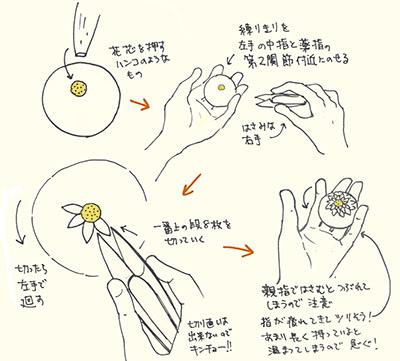 ハサミ菊_f0152544_22481749.jpg