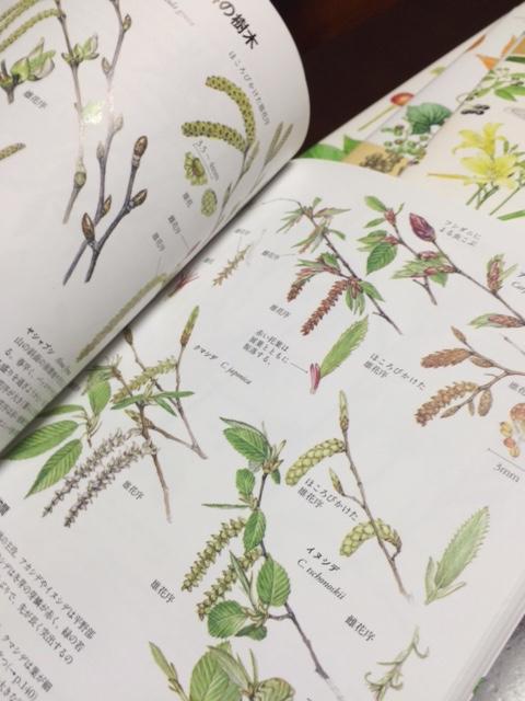 植物の図鑑_c0206645_16462853.jpg