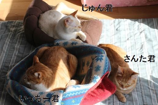 崩壊猫さん同志は群れる!_e0151545_21384373.jpg