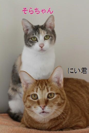 崩壊猫さん同志は群れる!_e0151545_21385591.jpg