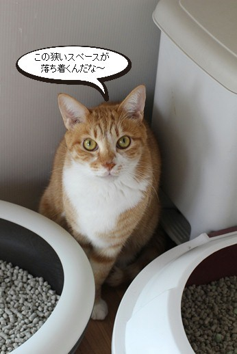 崩壊猫さん同志は群れる!_e0151545_21391134.jpg
