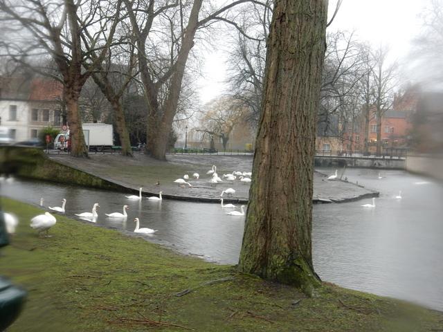ベルギー・オランダの旅6~雨の中のブルージュ_e0326953_16471598.jpg