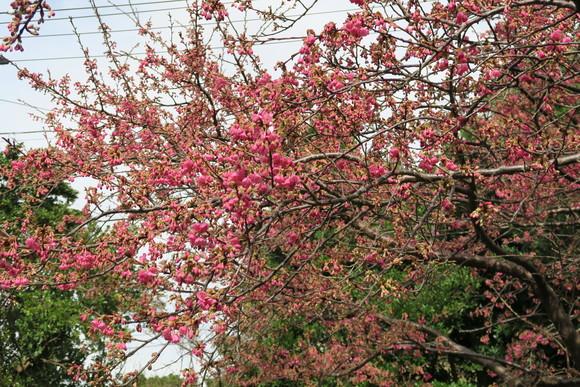 寒空の中の花見です_e0292172_20543469.jpg