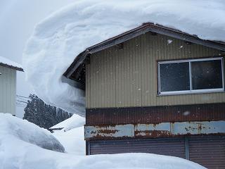 雪害_d0122374_187938.jpg