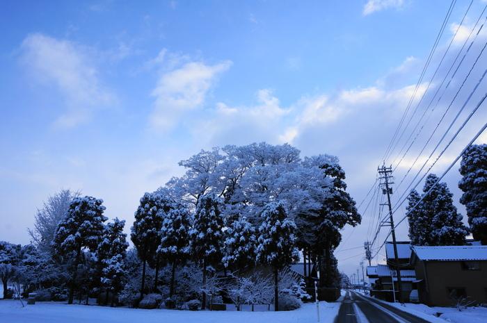 久しぶりに積雪の朝_d0047885_17533237.jpg