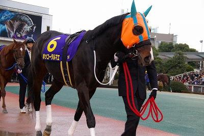 川崎記念は、ホッコータルマエが1.0倍の圧倒的人気に応えGI8勝目_b0015386_2145184.jpg