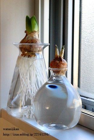 さこうさんのヒヤシンス用水栽培ポット_e0214646_99265.jpg