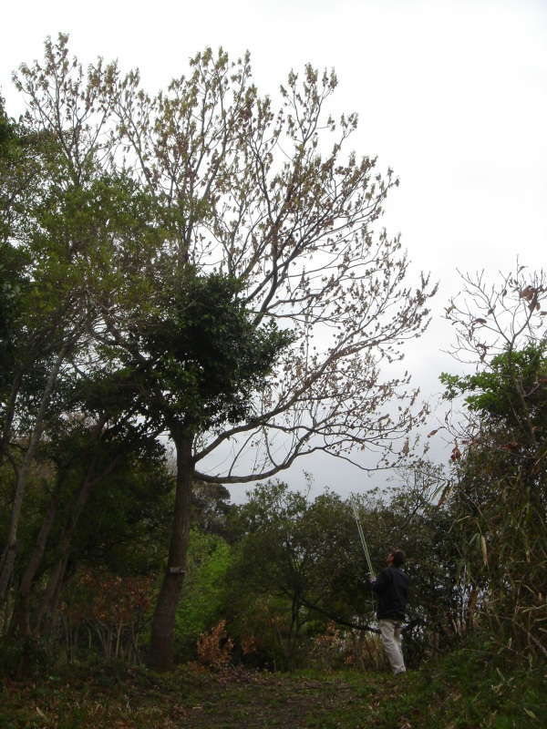 尾崎漁協よりEM活性液の引取・・・うみべの森を育てる会_c0108460_00351801.jpg