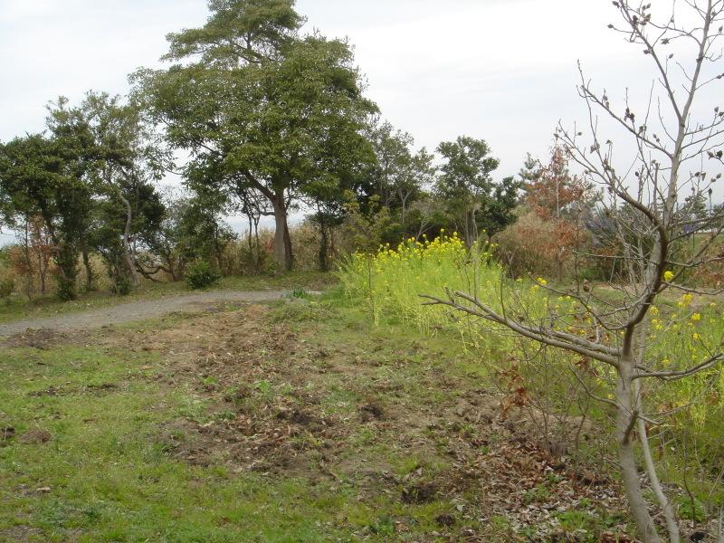 せんなん里海公園内に再植樹・・・うみべの森を育てる会_c0108460_13280211.jpg