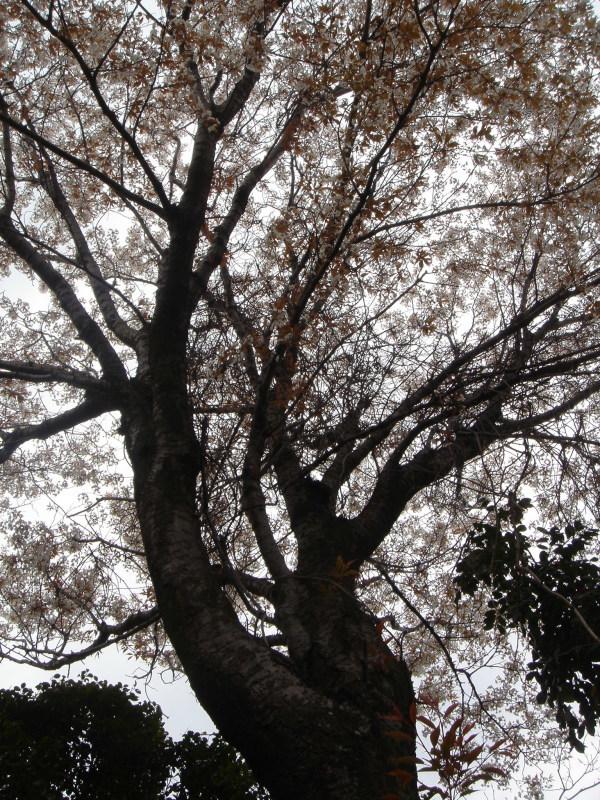 せんなん里海公園内に再植樹・・・うみべの森を育てる会_c0108460_13280287.jpg