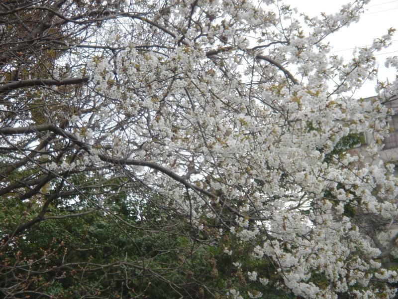 せんなん里海公園内に再植樹・・・うみべの森を育てる会_c0108460_13280371.jpg