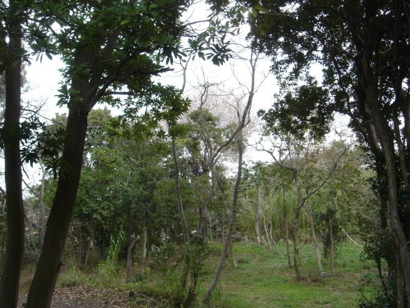 せんなん里海公園内に再植樹・・・うみべの森を育てる会_c0108460_13315015.jpg