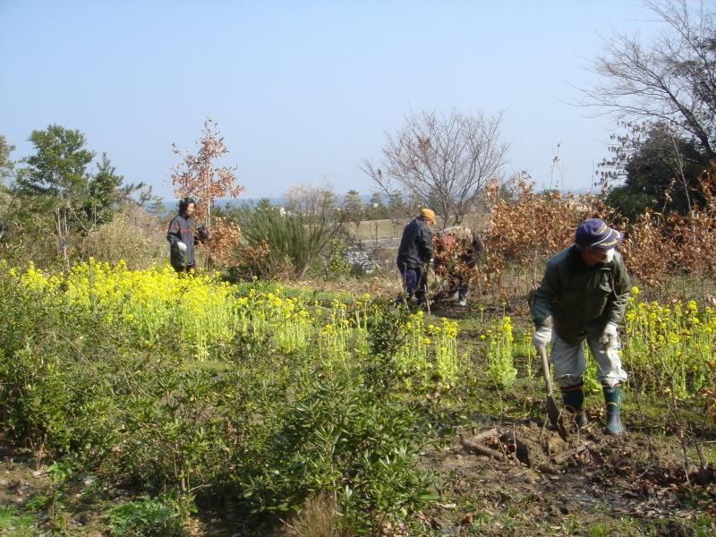 せんなん里海公園内各所へ植樹・・・うみべの森を育てる会_c0108460_21242244.jpg