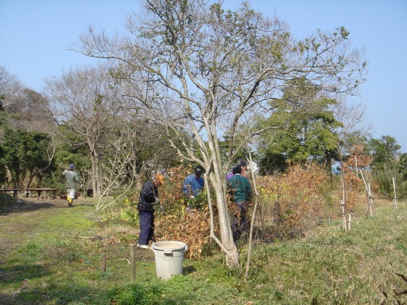 せんなん里海公園内各所へ植樹・・・うみべの森を育てる会_c0108460_21242359.jpg