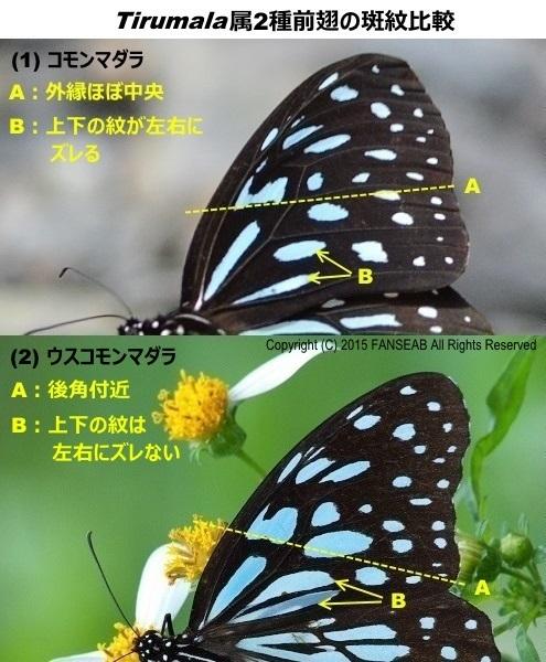 f0090680_20404411.jpg
