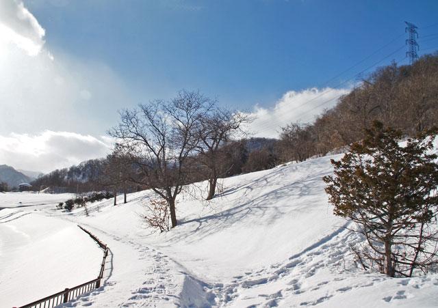 雪景色_d0162994_1439398.jpg