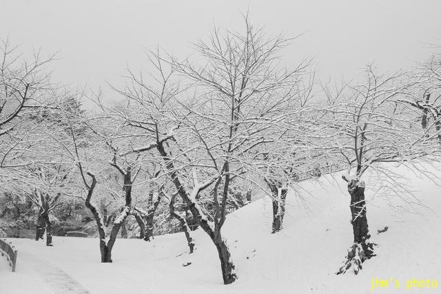 冬の重たい風景たち_a0158797_2351155.jpg