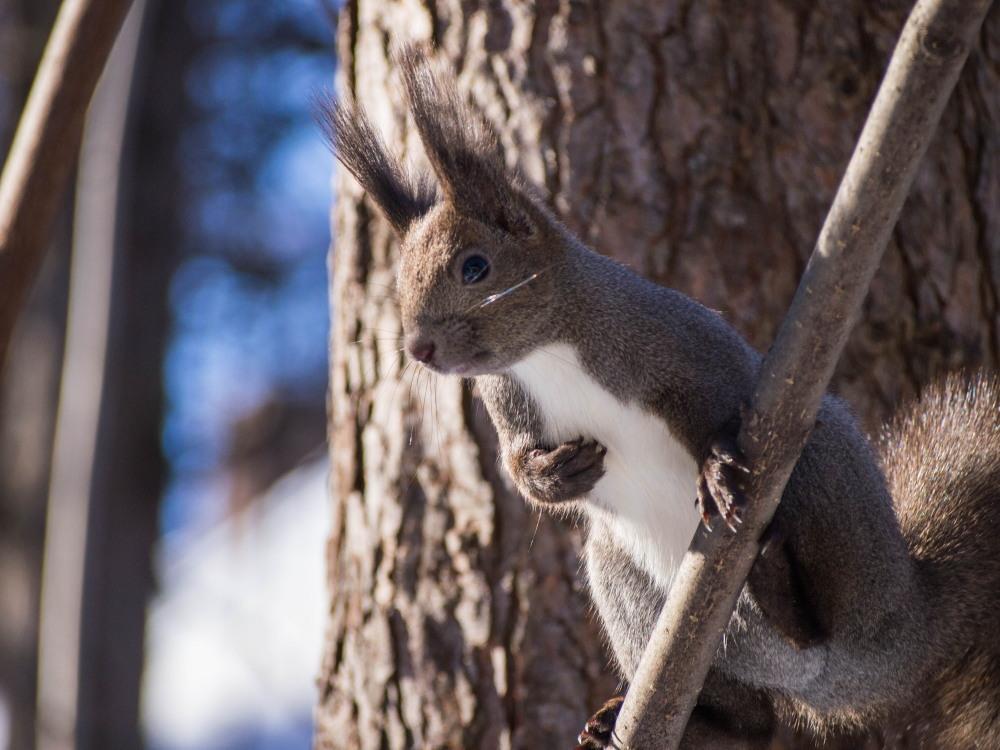 """最近のお気に入り?キハダの枝で遊ぶ""""エゾリス君""""_f0276498_23441654.jpg"""