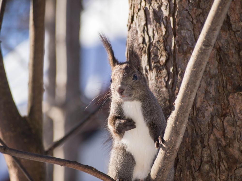 """最近のお気に入り?キハダの枝で遊ぶ""""エゾリス君""""_f0276498_23445691.jpg"""