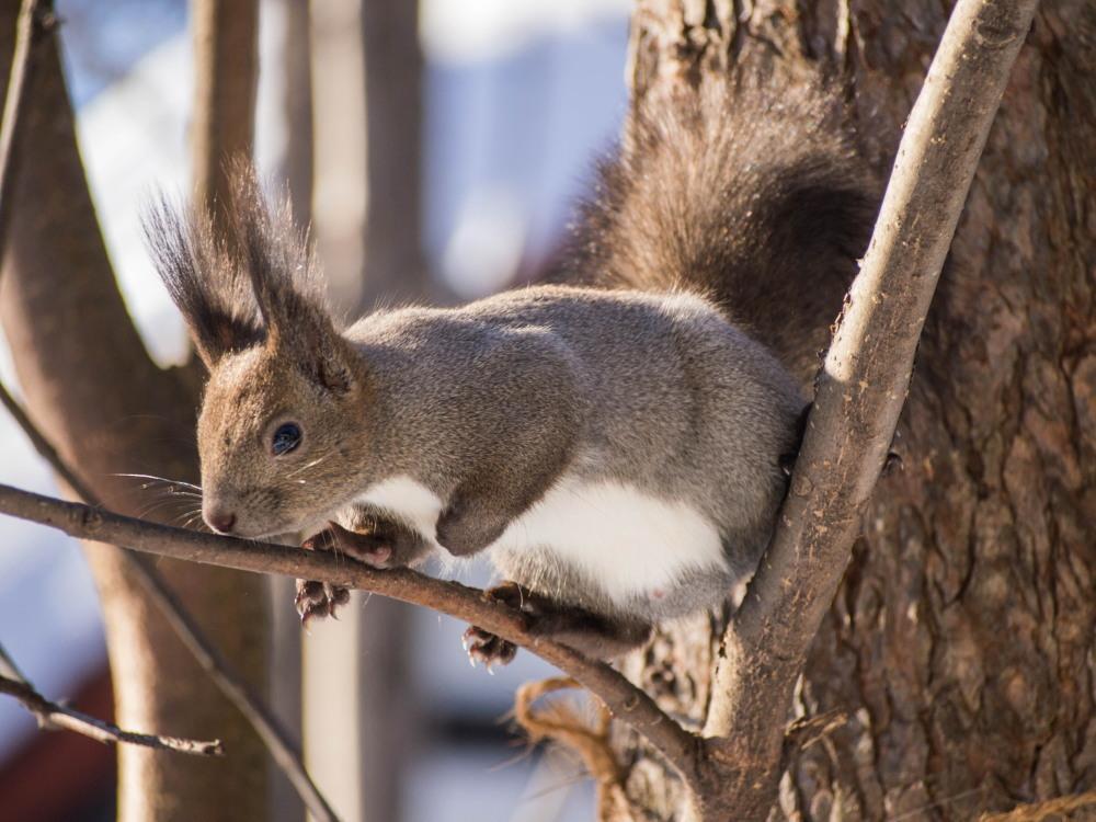 """最近のお気に入り?キハダの枝で遊ぶ""""エゾリス君""""_f0276498_23452621.jpg"""