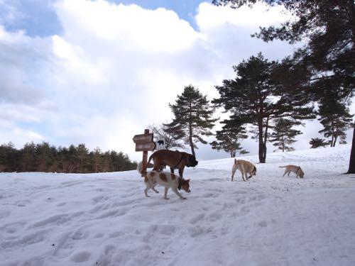 雪山にハイキング_e0192217_6164159.jpg