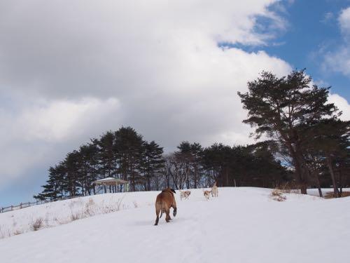 雪山にハイキング_e0192217_664774.jpg