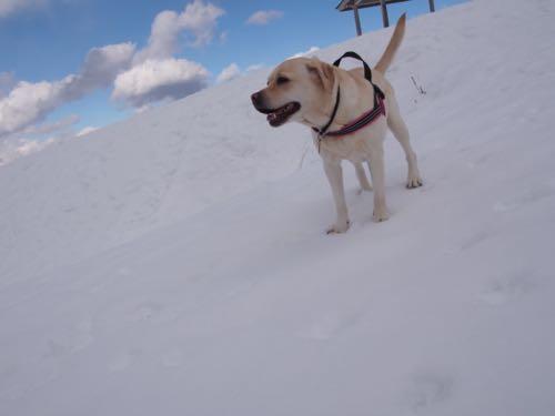 雪山にハイキング_e0192217_67569.jpg