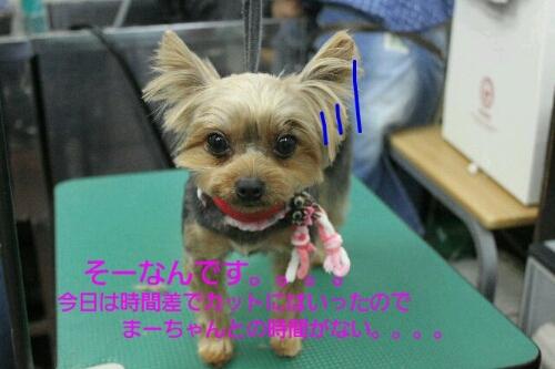 b0130018_9204046.jpg