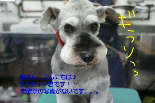 b0130018_933631.jpg