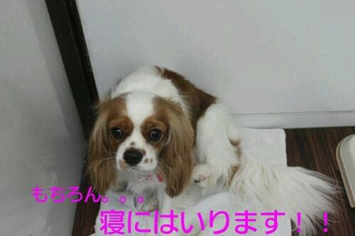 b0130018_9345766.jpg