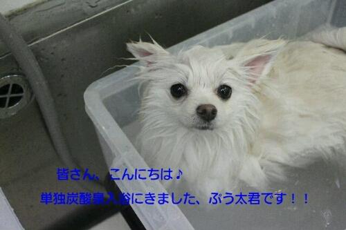 カフェ_b0130018_938628.jpg