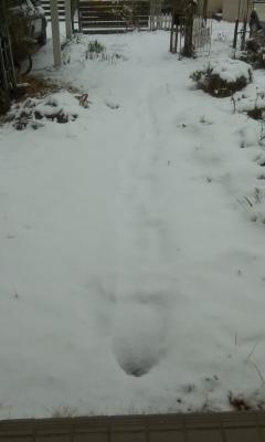 大雪再び?!_a0168922_15392947.jpg