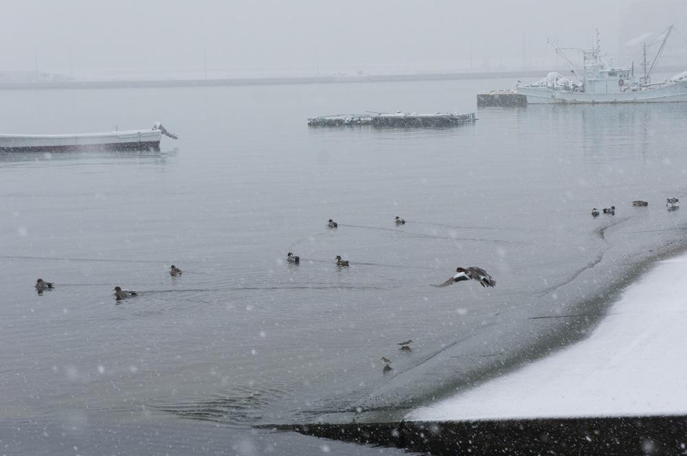 港に降る雪_d0001843_22272118.jpg