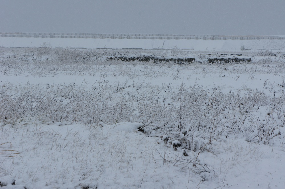 港に降る雪_d0001843_2244162.jpg