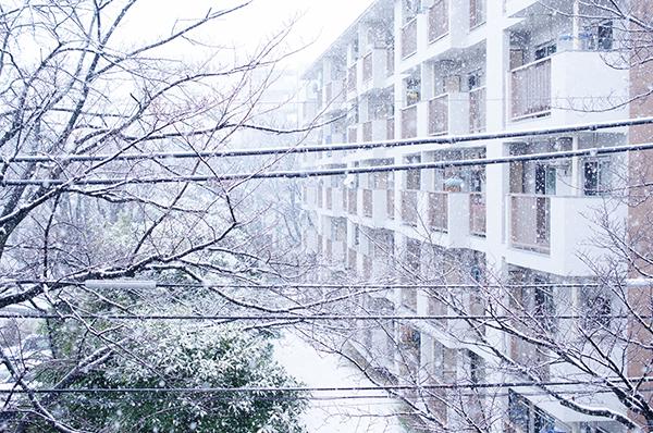雪とジミー・ページとマフィン_a0003650_23224348.jpg