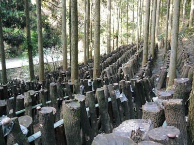 原木しいたけ 森の旨みを詰め込んで大好評発売中!!_a0254656_17401640.jpg