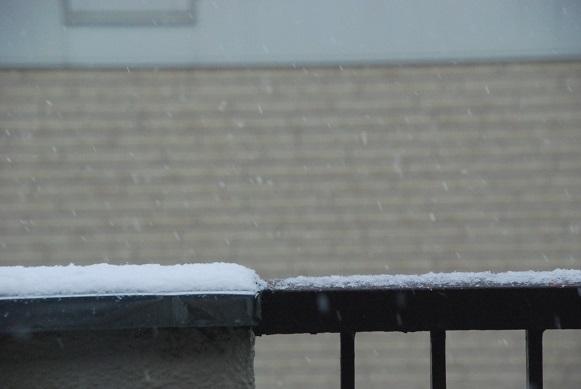 今朝の雪_d0135762_227774.jpg