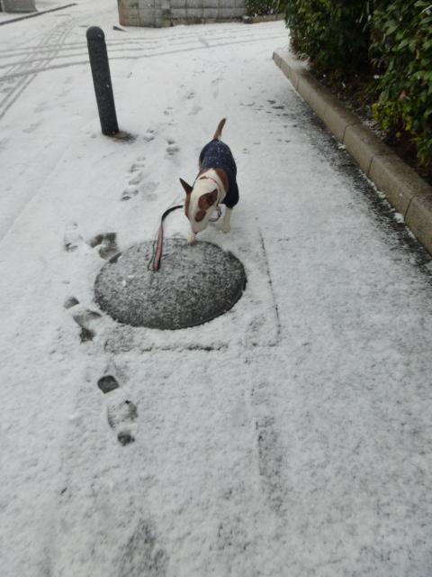 ひとこま・雪散歩_b0349589_93426100.jpg