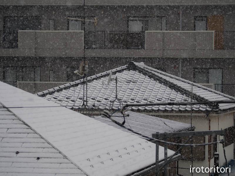 雪  (ハクセキレイ)  2015/01/30_d0146592_21241019.jpg