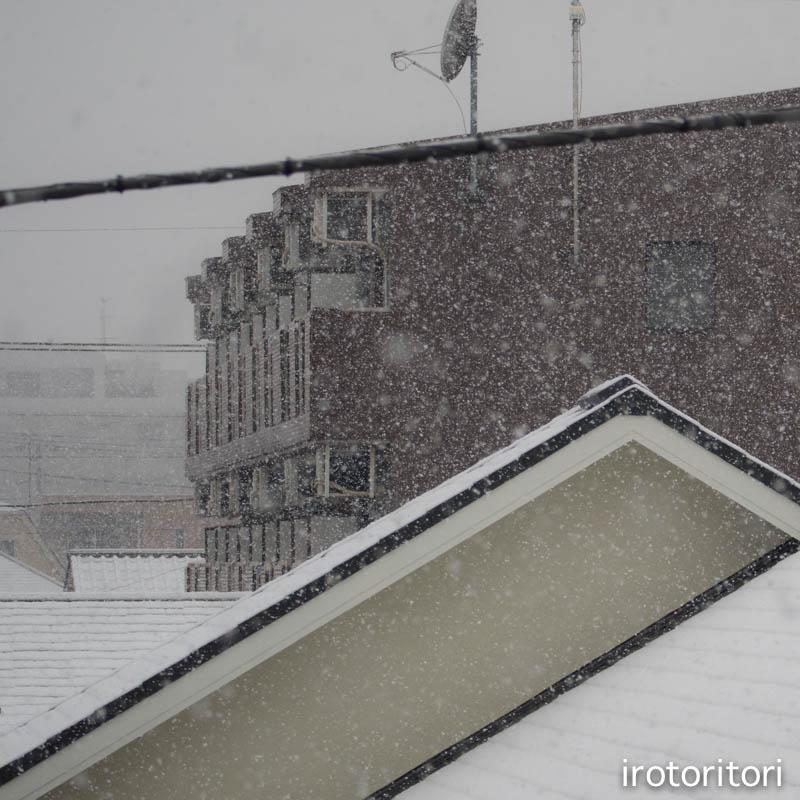 雪  (ハクセキレイ)  2015/01/30_d0146592_2124859.jpg