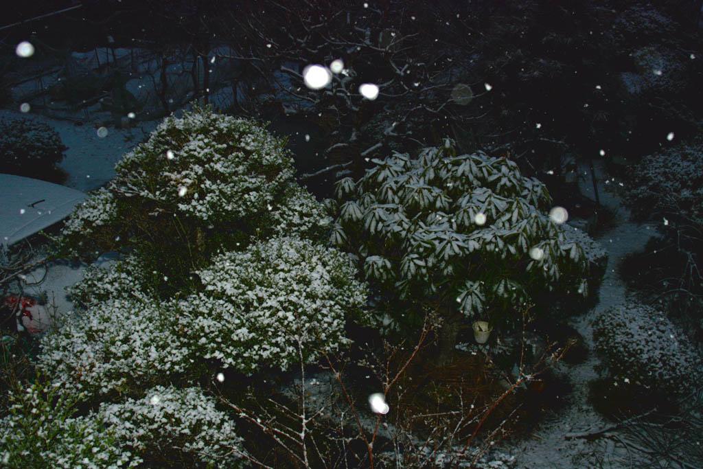 火災/積雪と鳥達(イカル、ジョウビタキ雌、ダイサギ)/シロハラ/太陽面/月とラブジョイ彗星_b0024798_16272172.jpg