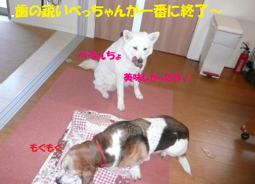 f0121712_7324769.jpg