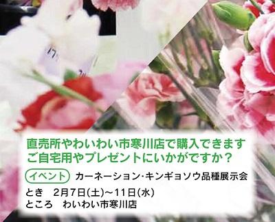 カーネーション キンギョソウ 品種展示会 寒川町_d0240916_1411322.jpg