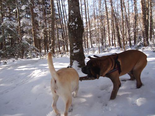 新雪の中で遊びました。_e0192217_15164543.jpg