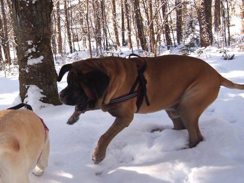 新雪の中で遊びました。_e0192217_15165875.jpg