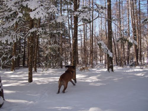 新雪の中で遊びました。_e0192217_1516767.jpg