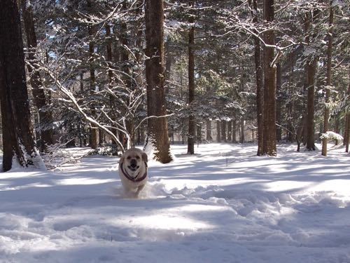新雪の中で遊びました。_e0192217_15173713.jpg