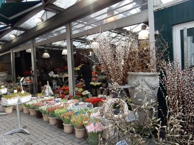 ベルギー・オランダの旅7~冬の花市場_e0326953_2154283.jpg